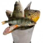 Pet Fish?